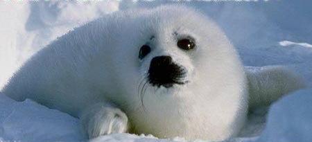 动物也流泪 只是未到伤心时