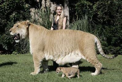 稀奇!世上十大奇特杂交动物