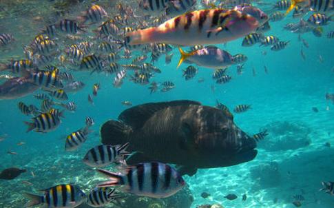 壁纸 海底 海底世界 海洋馆 水族馆 桌面 485_302
